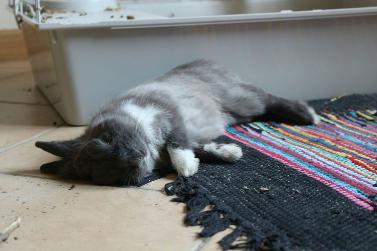 Lovely Oneanimal Rabbits Sleeping Domestic Animals Domestic Pets Beautiful ♥ Indoor Canon700D First Eyeem Photo
