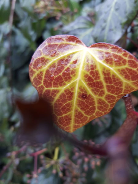 Yaprak Nature Beauty In Nature Tree Yapraklar🍂 Yapraklar Yaprakdokumu Yaprak 🍃 Yaprak Ve Mevsim Yaprakguzeli Sonbaharda Sonbahar. Mevsim Mevsimler