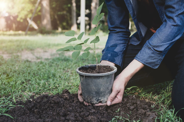 Earth Green Growing Helping Nature Plant Planting Sapling Seed Tree Background Dig Dust Ecology Environment Forest Forestation Graden Grow Hand Leaf Preserve Protection Reforestation Soil