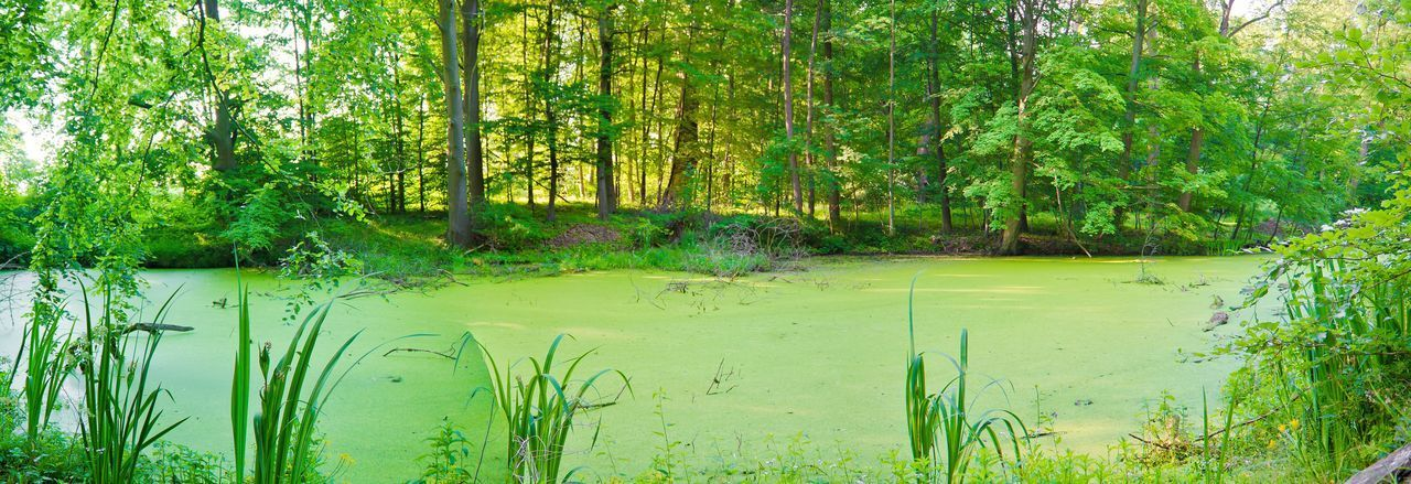 Power green. Panorama Forest Forest Photography Amazingplaces Fotografie Lush Foliage Lush Tree Water Flood Lake Algae Swamp Reflection Green Color Grass Plant Green Countryside Wetland Marsh Young Plant Lakeside Lush - Description Standing Water