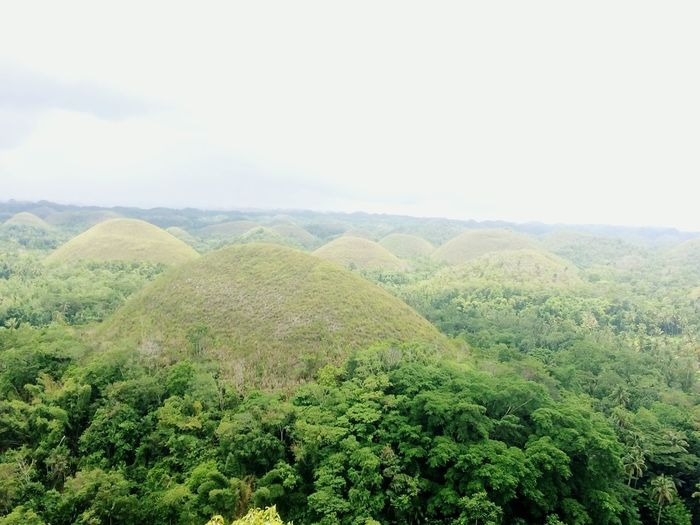 Chocolate Hills, Bohol, Philippines Chocolatehills Tourist Attraction  Tree Rural Scene Agriculture Field Hill Sky