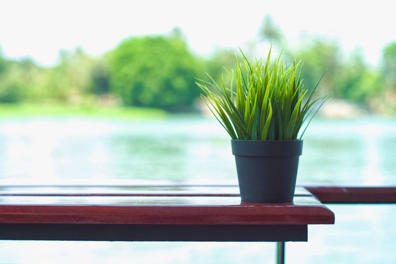 Selective focus on small bush in the plastic pot on the wooden table with blurred river in background Leaf Small Bush Decoration Focus On Foreground Plant Growth No People Day Nature Green Color Water Close-up Wood - Material Outdoors Table Lake Potted Plant Beauty In Nature Selective Focus Tree Park