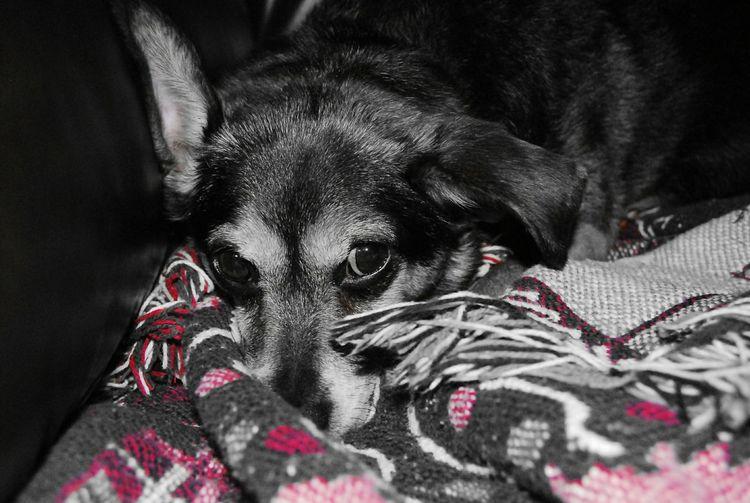 Murphy Color Splash Eyem Best Shots Dogslife EyeEm Gallery Black & White The Moment - 2015 EyeEm Awards Pets Corner Cgk Photography