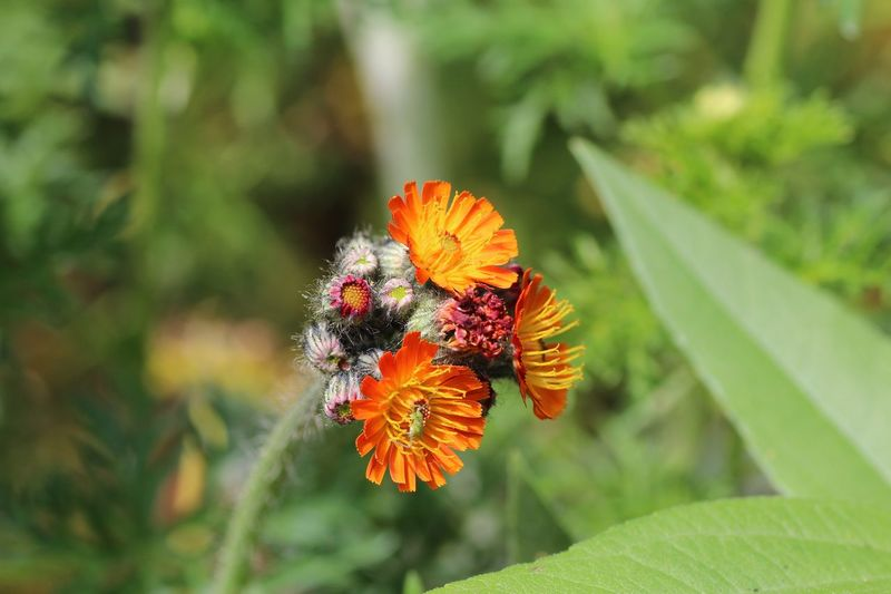 Beautiful Garden Plant Part Leaf Beauty In Nature Plant Animal Themes Insect Invertebrate Close-up Flowering Plant Growth Animals In The Wild Animal Wildlife Flower Fragility Animal Vulnerability  Nature Day One Animal Focus On Foreground
