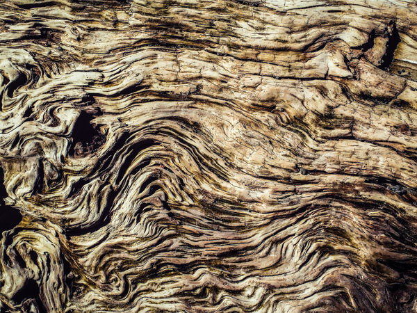 Natural Art  Nature Photography Nature_collection Naturesbeauty Weathered Wood Weatheredwood Wood - Material Eye4photography  Petrified