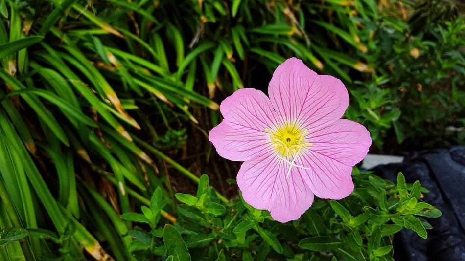 EyeEm Flower Flower 🌷 Flowers 🌹 Flowers Flower Collection Flowerporn Flowers,Plants & Garden Flower Porn Reedited
