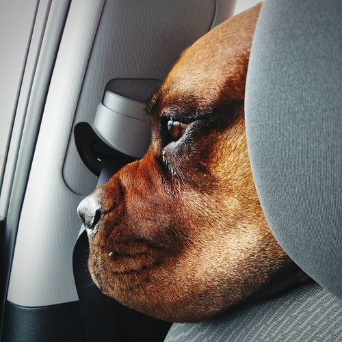 Dogs Dogslife Dogs In Cars Dog Portrait Dog Of The Day Dogs Life Dogs Dogs Dogs Dogs