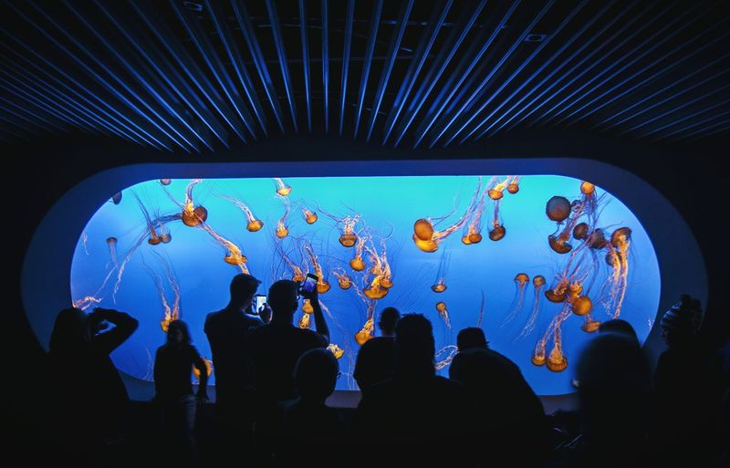 Large Group Of People Silhouette Tourism Travel Destinations People Jellyfish Sea Life Seascape Sea Indoors  Monterey Monterey Bay Ocean Aquarium Ceiling Silhouette Large Group Of People Leisure Activity Person Decoration Travel Destinations Fresh On Eyeem  Interiors Tourism First Eyeem Photo EyeEmNewHere