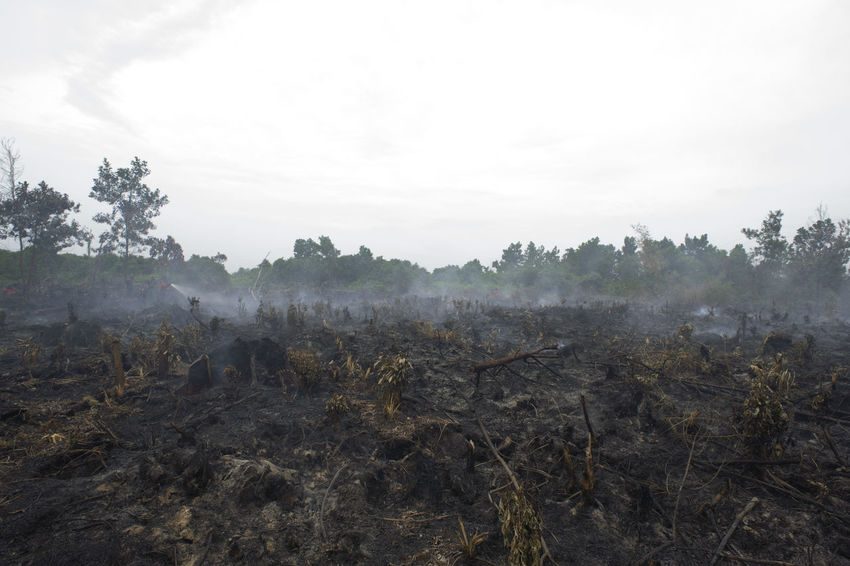 the atmosphere of the second day on Peat fires which conducted outages by manggala agni with the help of the police , TNI AD, BNPB, PT. Chevron and using 2 pieces of heavy equipment used to create reservoirs around fire flames in a village Air Hitam sub-districts Payung Sekaki Pekanbaru in Riau, 11 Aug 2016 Adi Sudarto Field Fire Fire Fires Kebakaran Kebakaranhutan KebakaranLahan Kebakaranpekanbaru Kebakaranriau Peat Fires