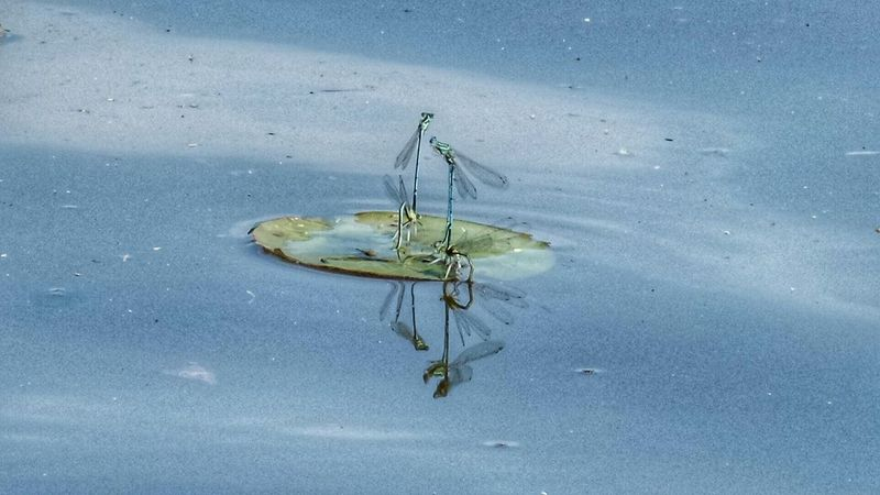 Dragonfly Water Reflections EyeEm Nature Lover EyeEm Best Shots Lakelife At The Lake Taking Photos Getting Inspired The Art Of Nature HDR