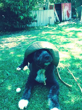 Summer Dogs Hat Christmas Day South Western Australia Pemberton Enjoying Life Hanging Out Relaxing Dog Home Pet Portraits