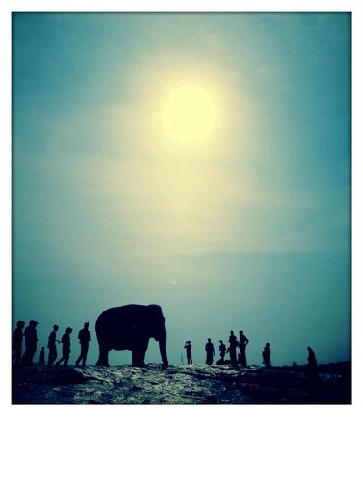 Elephant Morning Taking Photos Popular Photos Most affectionate addorable mammal