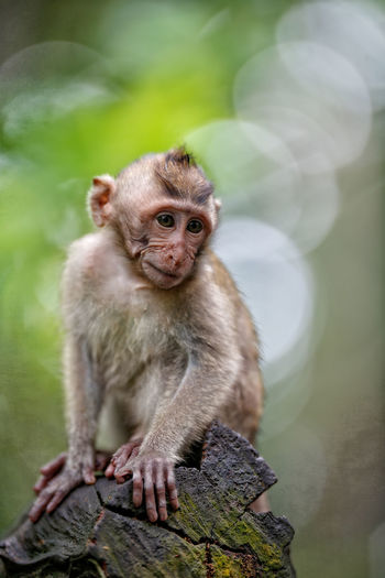 Monkey Bussines Animal Themes Animals In The Wild Close-up Day Focus On Foreground Looking Away Mammal Monkey Nature No People One Animal Outdoors Portrait Primate Sitting Tree Two Animals Wildlife Young Animal