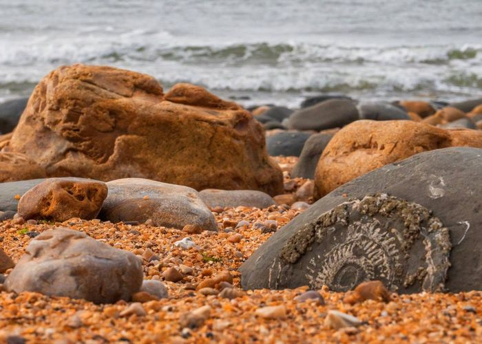 Beach fossils Fossilized Fossil Hunting Geology Jurassic Coast EyeEm Selects Beach Land Sand Sea Rock Solid Water Stone - Object Surface Level Nature No People Day Rock - Object Beauty In Nature Tranquility Stone Focus On Foreground Outdoors Tranquil Scene Pebble