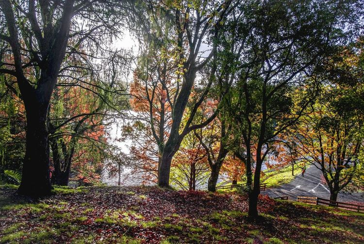 autumn leaves Tree Outdoors Day Beauty In Nature Scenics Water Autumn🍁🍁🍁 Autumn Pond Water