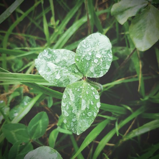Taking Photos Check This Out Hello World Relaxing Enjoying Life Nature Traveling Colour Of Life EyeEm Nature Lover Leaves🌿 Green Is Beautiful GREEN IS GOOD Raindrops On Leaves Macro Water Reflections