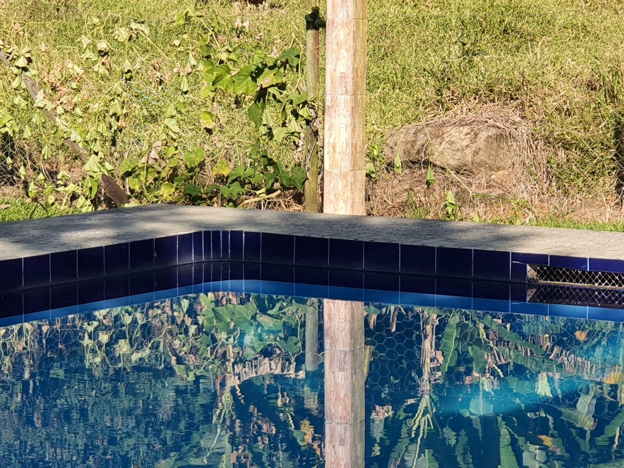 HIGH ANGLE VIEW OF SWIMMING POOL BY TREE