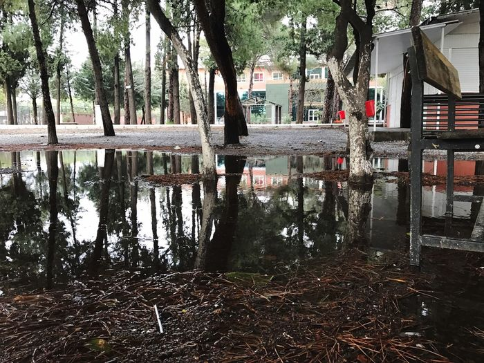 EyeEmNewHere Tree Water Reflection Built Structure No People Architecture Outdoors Tree Trunk Day Puddle Building Exterior Nature Flood