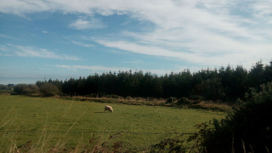 Ireland Countryside Wicklow Mountains  Sheep Green Nature Green Fields Travel Photography