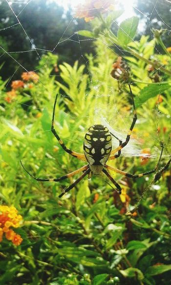 Nature_collection Spider Beauty Of Nature Beauty In Nature Life No Thanks Eek! Up Close Arachnid The Great Outdoors - 2016 EyeEm Awards
