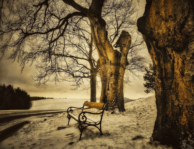 Empty Bench By Bare Tree