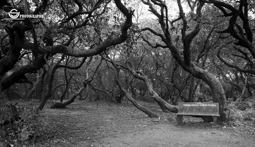 Unmeshshirsath Usphotography Contrast Creative Light And Shadow Tree Bench Forest Monochrome Monocolour