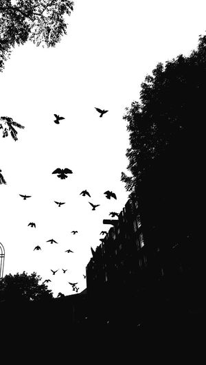 The Birds, Our London