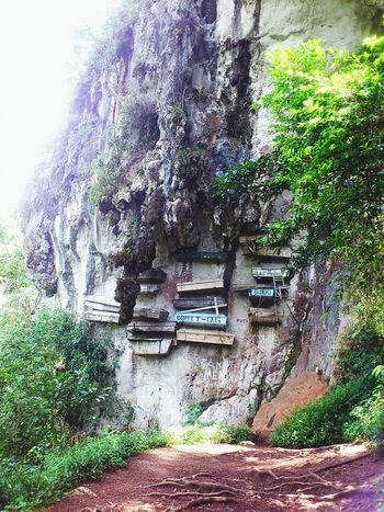 Hanging Coffins of Sagada Mt. Province Day Tree Outdoors Built Structure Architecture Nature Coffins  HangingCoffins Sagada Adventure Sagada, Philippines
