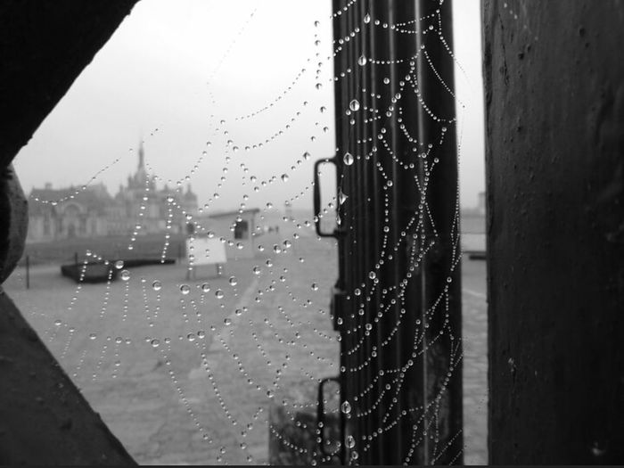 RainyDays Chantilly Macro_collection Macro Photography Macro Beauty Spiderweb Spider Web Spider Webs Blackandwhite Black And White Blackandwhite Photography Web Rainy Days☔