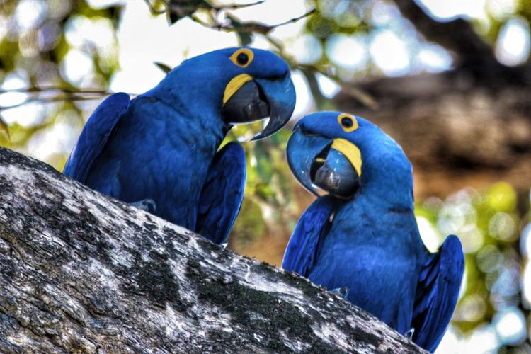 Low angle view of hyacinth macaws perching on wood