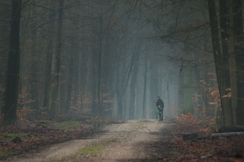 Sachsenwald Forest Dark darkness and light Darkness And Beauty Darkness Tree Land WoodLand Fog Plant One Person Tree Trunk Adult Walking Trunk Road Rear View Solitude Nature Direction Spooky Real People Outdoors Biking