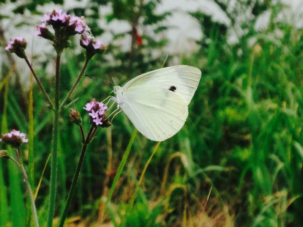 蝶々 がちょー近い。 Butterfly Nature Nature_collection EyeEm Nature Lover Beautiful Nature Nature Photography Earth Peace White