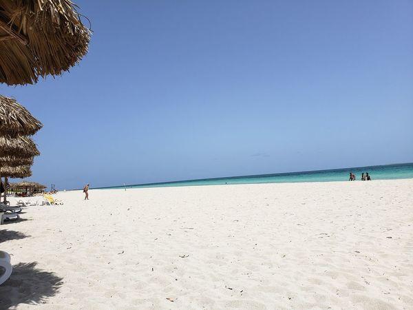 Water Sea Beach Full Length Tree Sand Blue Clear Sky Summer Dog Calm Tranquil Scene Sun