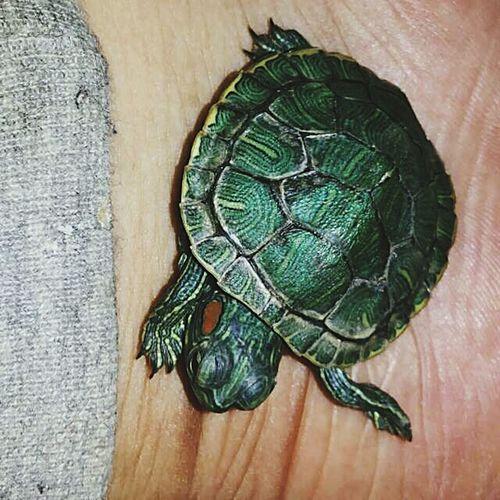 Turtle 🐢 wIthold love Phanivee