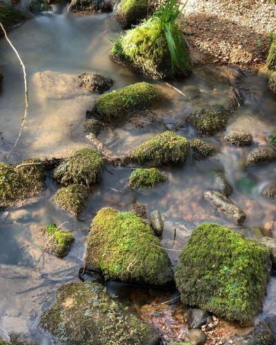 Moss growing on rocks by lake