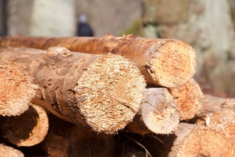 Close-up Sunlight Day Nature No People Focus On Foreground Log Timber Wood - Material Brown