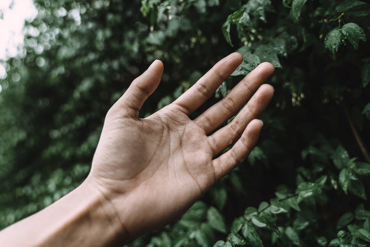 Close-up of hand holding plant against trees