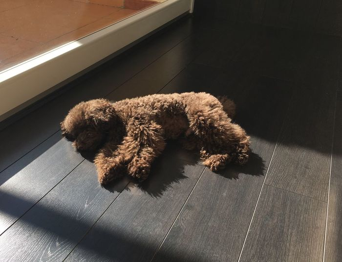 Dog relaxing on floor at home