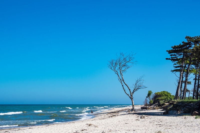 Baltic Sea coast. Baltic Sea Relaxing Sky And Clouds Tree Weststrand Ahrenshoop Beach Beauty In Nature Blue Coast Day Fischland-darß-zingst Horizon Over Water Nature No People Outdoors Prerow Scenics Sea Shore Sky Tourism Travel Destinations Vacation Water