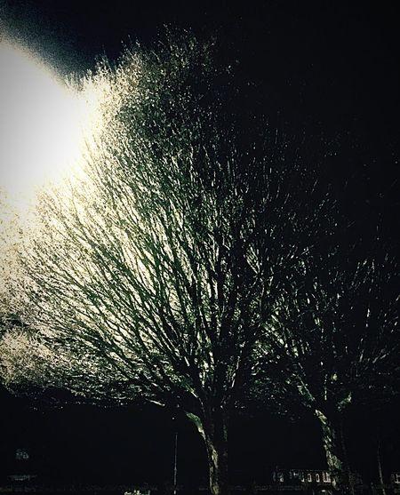Shadows Nighttree InTheDark