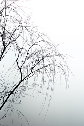 Bare Tree No People Branch Nature Sky Clear Sky Outdoors Beauty In Nature Tree Day Close-up