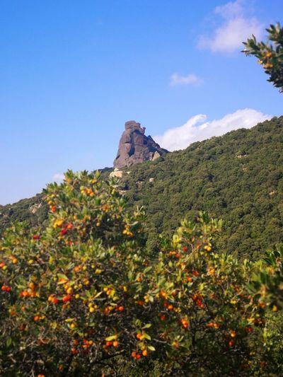 Sardinia Sardegna Italy  Sardinia Sardegna Mountain Nature Reserve Rock - Object Rock Formation Sky Landscape Plant Rocky Mountains Mountain Peak