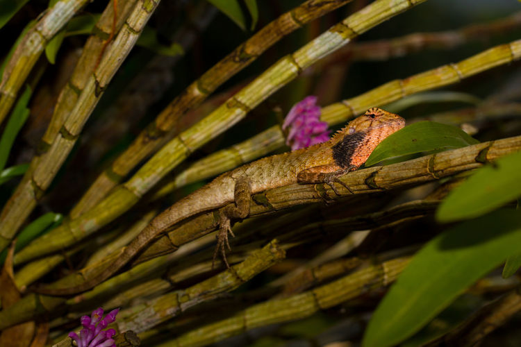 Lizard Thailand Travel Wildlife & Nature Wildlife Photography Animal Themes Animal Wildlife Animals In The Wild Beauty In Nature Close-up Day Leaf Nature No People One Animal Outdoors Photography Wildlife Wood - Material