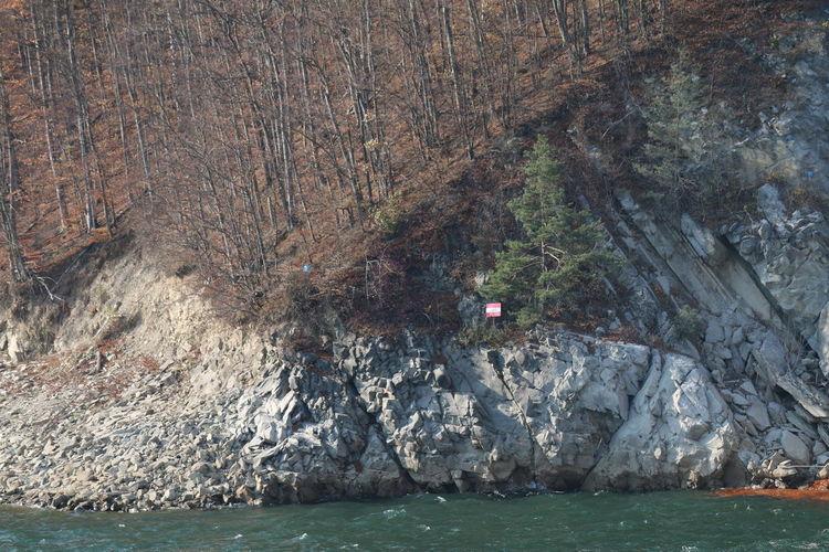 Water Rock Tree