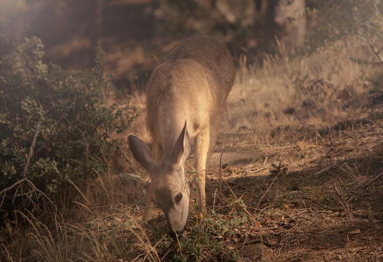 #Nature  #animals #deer #forest #naturelife #wild Animal Themes Animal Wildlife Animals In The Wild One Animal