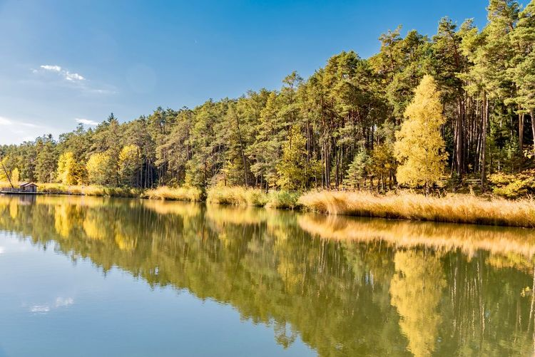 Scenic view of lake by trees in forest