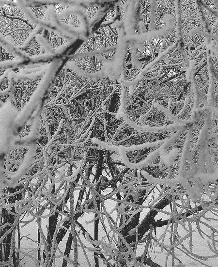 Frost Frozen