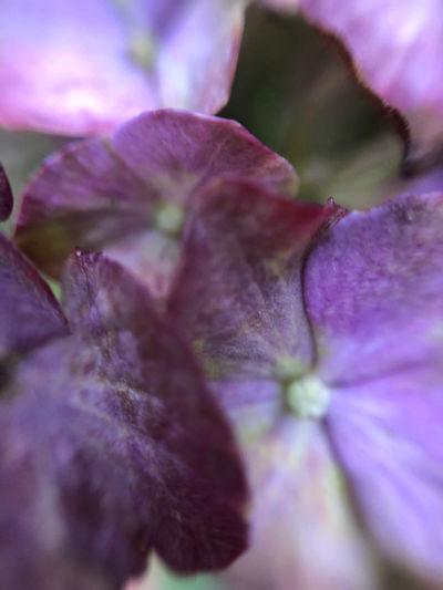Macro shot of purple flowering plant
