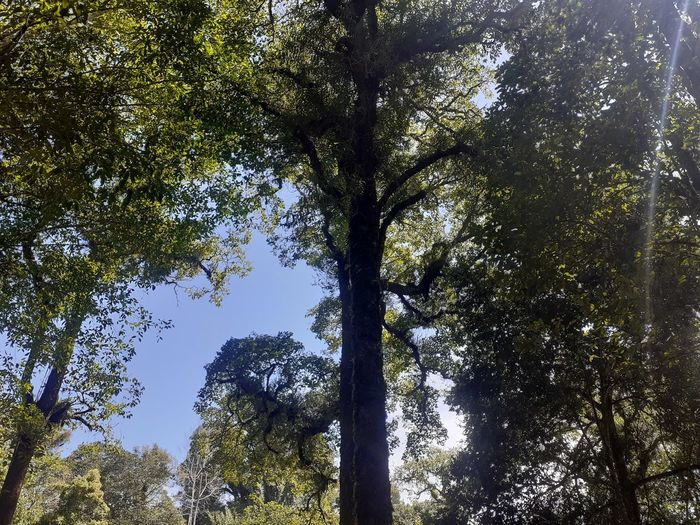 Low angle view of trees on sunny day