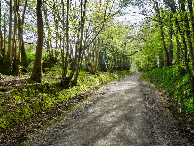 Tree Lined Pathway Beauty In Nature Day Forest Grass Green Color Growth Landscape Nature No People Outdoors Pathway Road Scenics Shadows Single Lane Road Sky The Way Forward Tranquil Scene Tranquility Tree Tree Lined